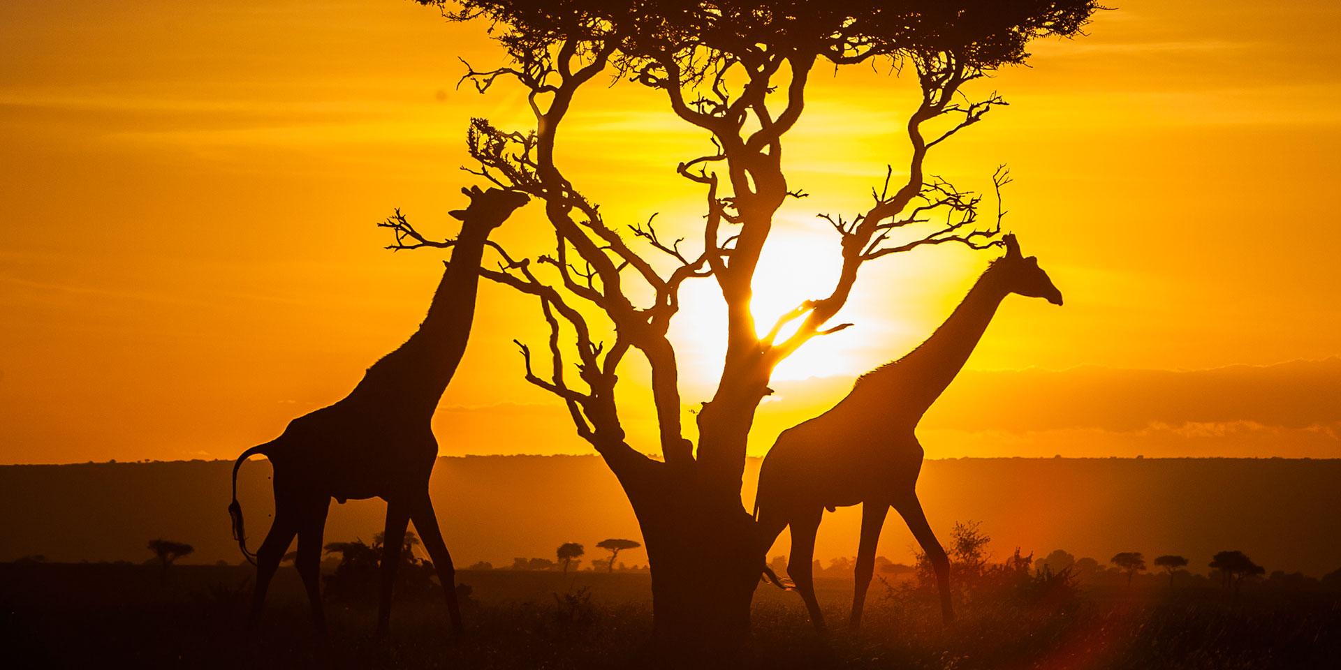 kenya-une-destination-qui-tient-ses-promesses